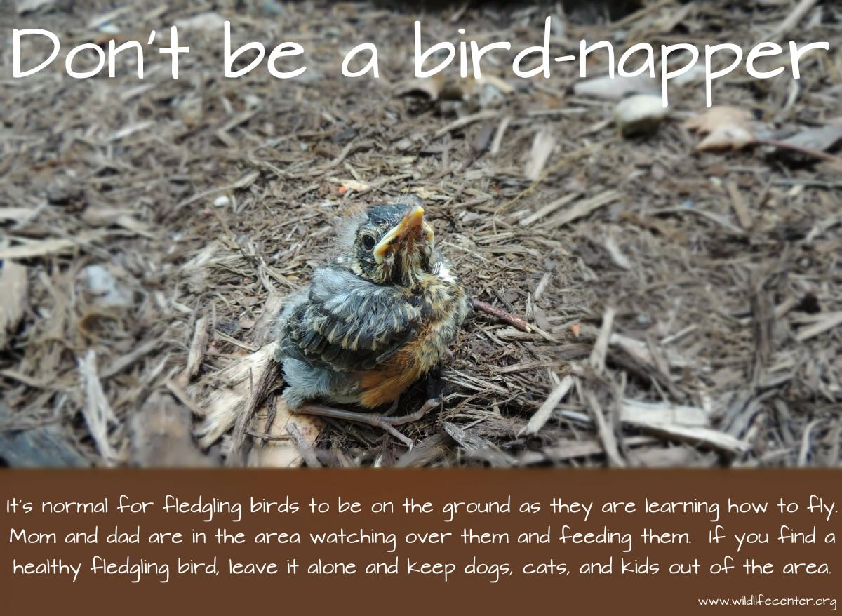 Annual Birdnapping PSA