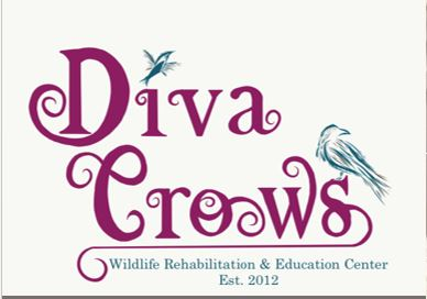 Diva Crows Reboot