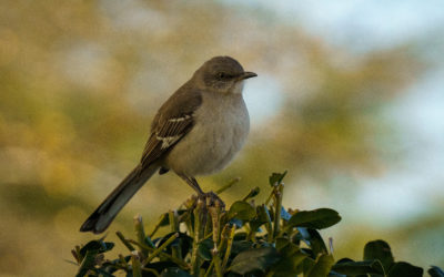 Our Education Programs and Birding Tips